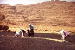 Sinai6